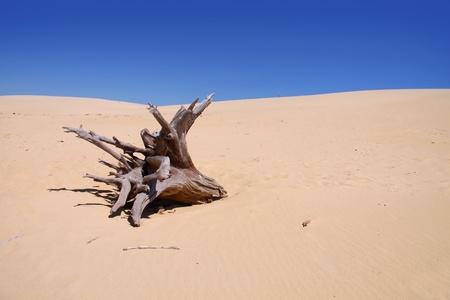 duramen: Desierto escénico con solo árbol degradado Foto de archivo