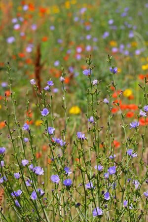 Colorful flowers in the lush green meadow