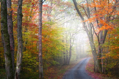 autumn colour: foggy landscape in Allegheny national forest Pennsylvania