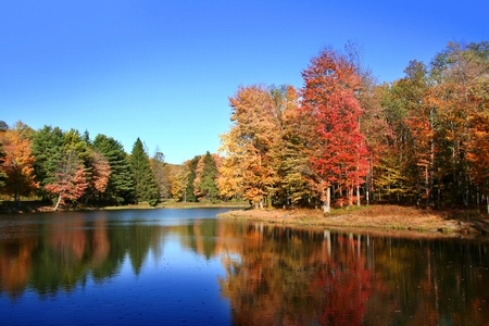 allegheny: Colorful tree reflections in beautiful lake in Autumn