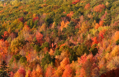 allegheny:  autumn trees in dense Allegheny national forest Stock Photo