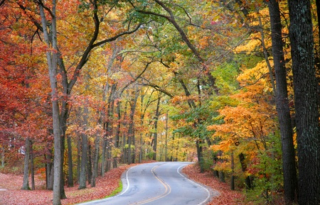 fall scenery: Road through forest in peak autumn colors Stock Photo