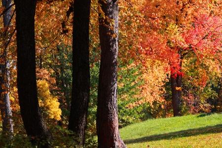 Bright autumn trees at its peak color photo