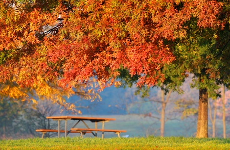 Colorful autumn tree and park bench photo