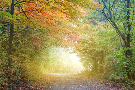 Morning fog in autumn time in forest
