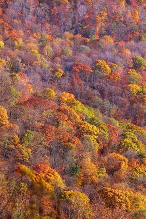 overlook: Autumn trees on the hill