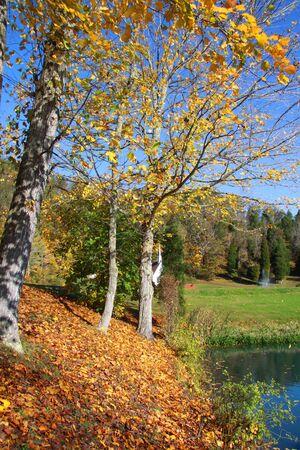 autumn trees at its peak in West Virginia Stock Photo - 11223313