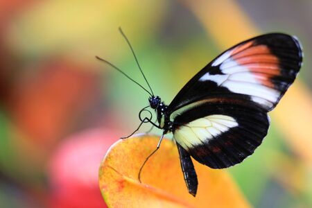 giant sunflower: close up shot of colorful butterfly on a plant Stock Photo