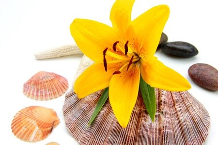 Spa concept ,One tiger Lily and sea shells  Stock Photo - 11868580