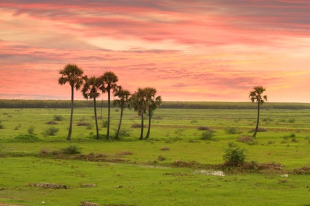 Sun set and colorful sky over paddy fields in India Stock Photo - 11972439