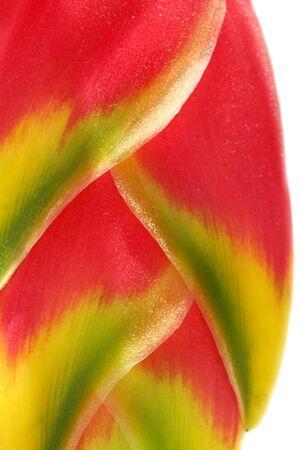 heliconia: Banana flower Stock Photo