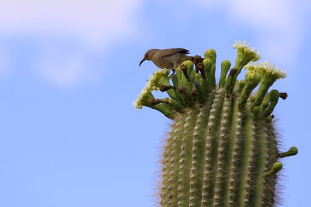 Single bird on Cactus photo