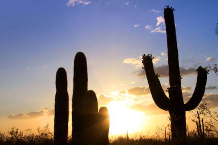 sonoran: Sun set at Saguaro national park Stock Photo