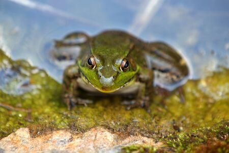 Close up shot of tiny frog in the pond photo