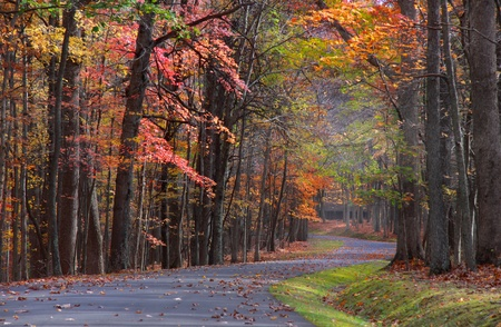 Colorful trees by the road in Babcock state park photo