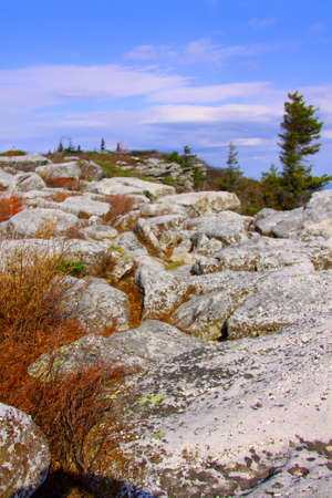 dolly: Dolly sods scenic area in West Virginia