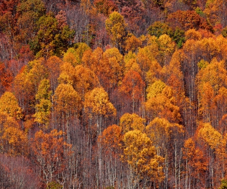 Bright orange autumn trees on a hill photo