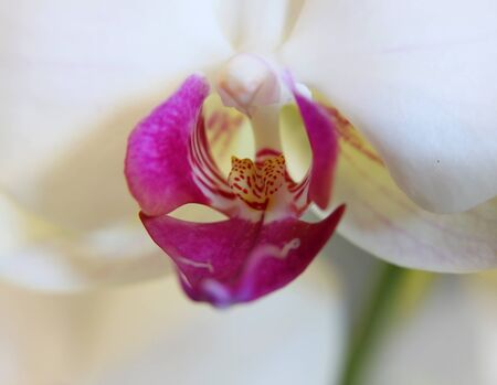 Close up shot of Orchid flower  photo