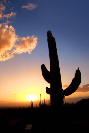 Sunset and Saguaro cactus in Saguaro national park Stock Photo - 14296453