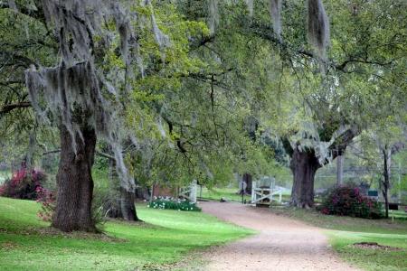 Beautiful landscape of lush green Cypress trees  스톡 콘텐츠