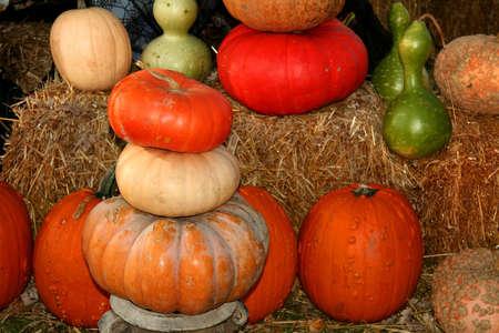 Pumpkin arrangement photo