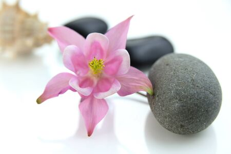 stack stone: Spa stones with pink flower  on white background Stock Photo