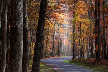 west virginia: Colorful trees in Babcock  state park Stock Photo