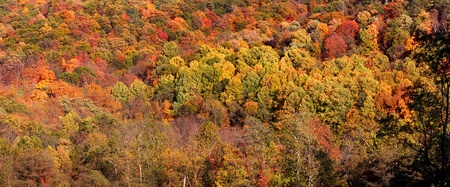 Panoramic view of colorful autumn trees photo