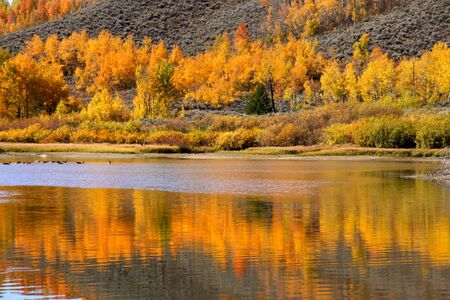 Perfect reflection of Aspen trees in the lake