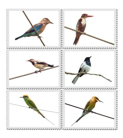 Different birds of India on stamp background photo