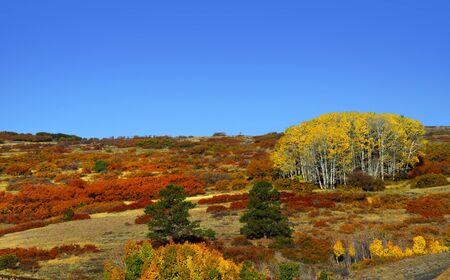 divide: Fall foliage near Dallas divide in Colorado