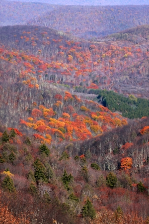 west virginia trees: Scenic valley in Appalachian mountains during end of autumn