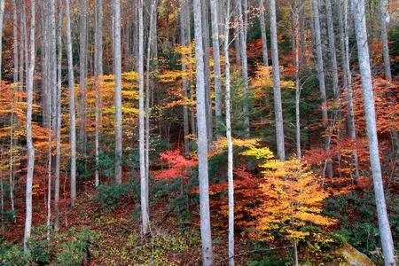 west virginia trees: Autumn bushes under tall trees Stock Photo