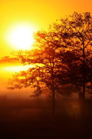 Sun rise in the morning fog photo