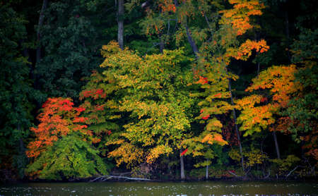 Early autumn trees in Kensington metro park photo