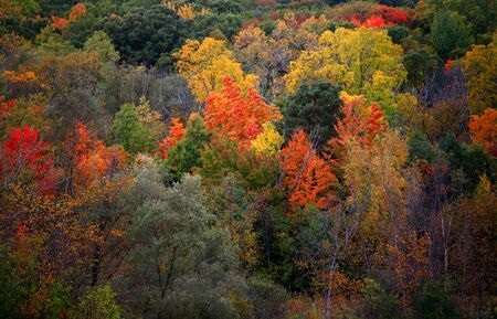 Beautiful autumn trees in Heritage park Michigan photo