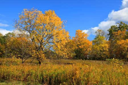 Beautiful autumn trees in Heritage park Michigan photo