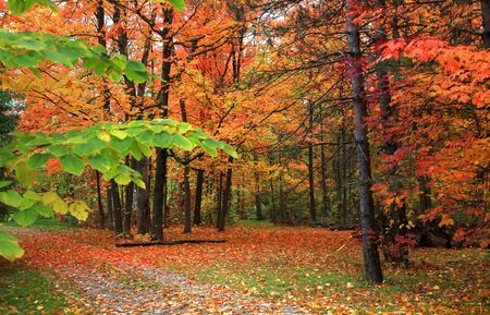 Beautiful fall scene in rural michigan photo