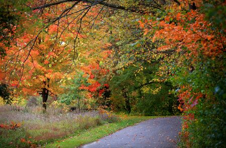 Scenic trail through a park in Michigan photo