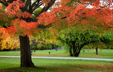 Beautiful autumn scene in the park photo