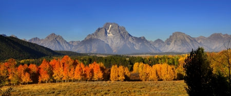 Fall foliage in Grand Tetons National park Stock Photo