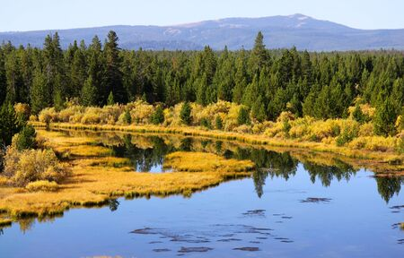 Pine trees and autumn bushes by Yellowstone river Stock Photo
