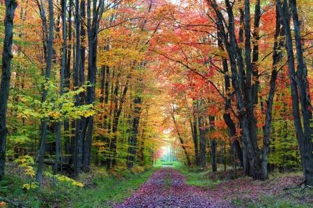 Scenic alley in Kinzua state park, Pennsylvania