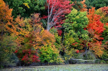 Colorful autumn trees in Maybury state park ,Michigan photo