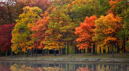 Autumn trees in Kensington Metro park Michigan