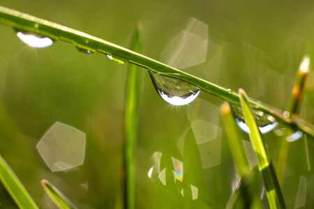 Close up shot of water drops on a blade of grass photo