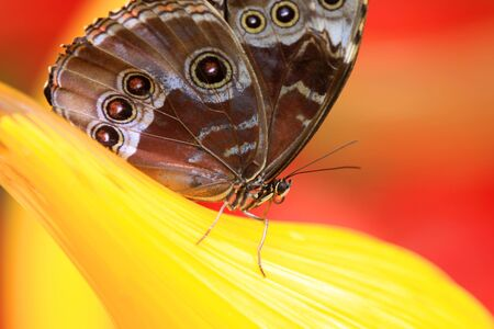 Close up shot of a butterfly with bright yellow and red background photo