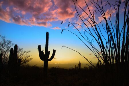 sonoran: Saguaro national park in evening sun light