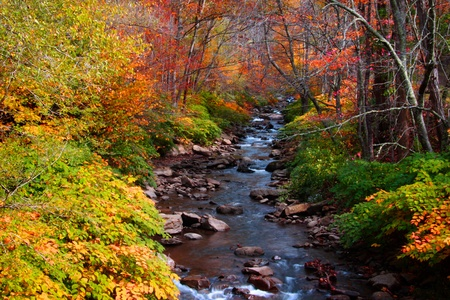 Small creek through colorful autumn trees photo