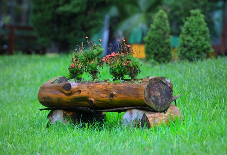 wilding: Flowering plants on a wood log Stock Photo